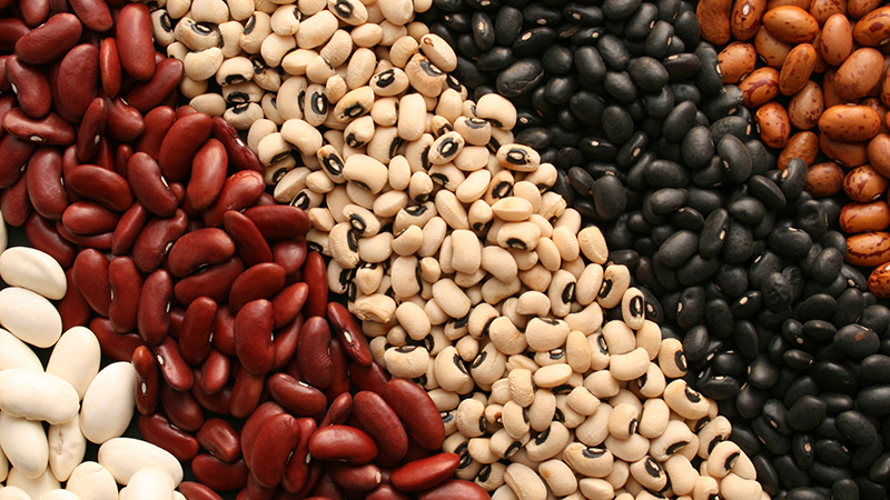 Various types of beans in rows