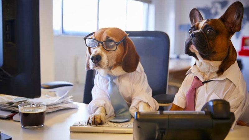 Dog Job Showcase